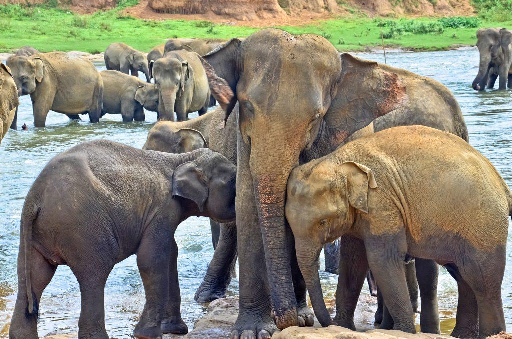 Elefanten im Wilpattu Nationalpark in Sri Lanka