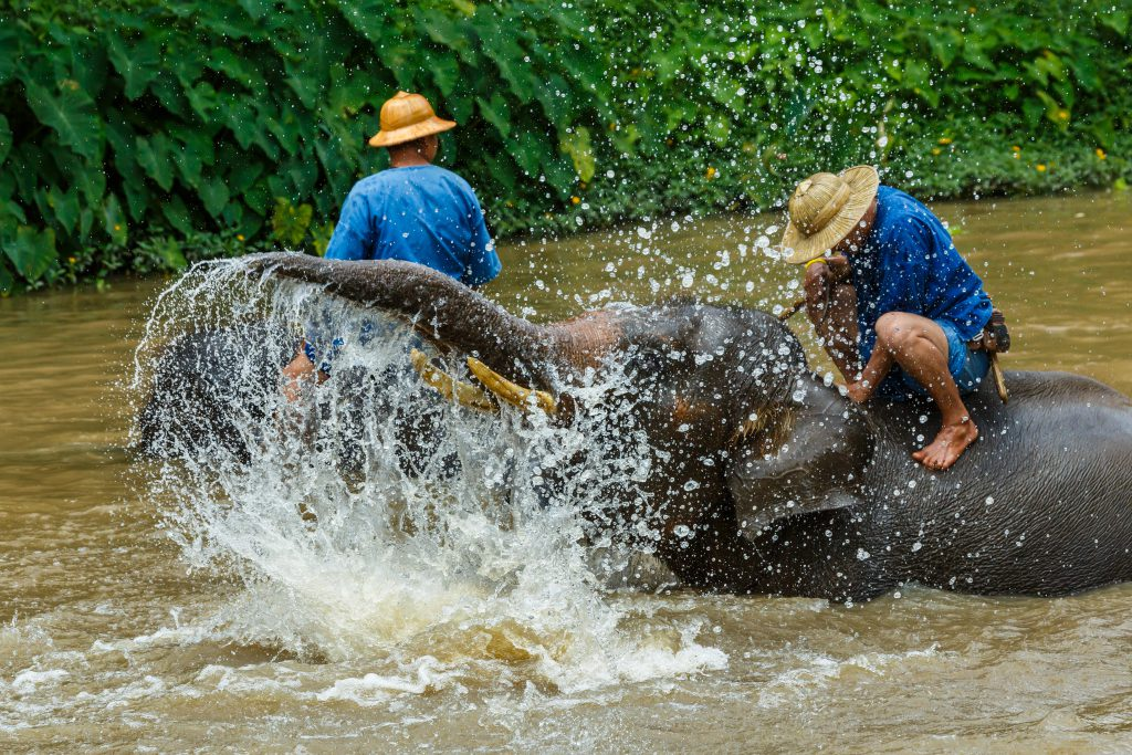 Thai Elephant Care Center in Thailand