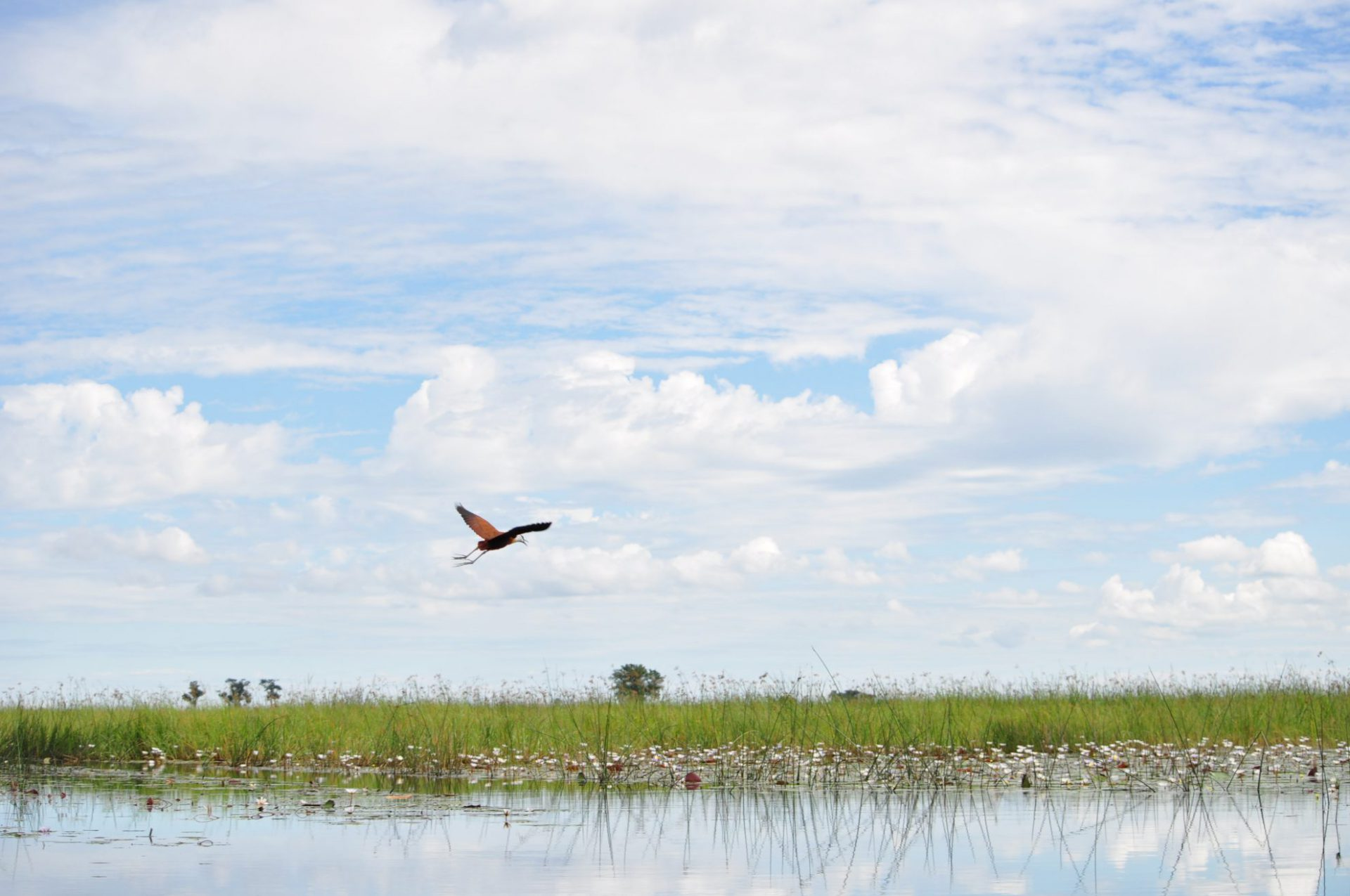 Botswana, Okavango Delta, Flamingo